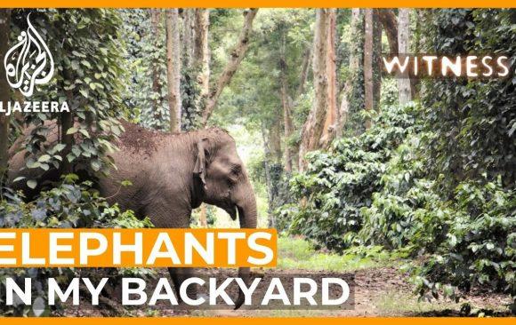 Millennium Discovers: India - Elephants in My Backyard