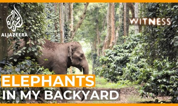 Millennium Discovers: India - Elephants in My Backyard