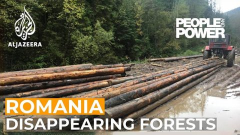 romania-forests