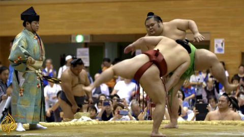 sumo-world