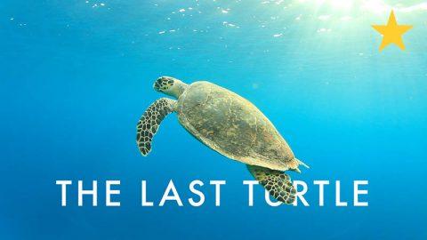 last-turtle-star