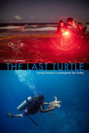 the_last_turtle