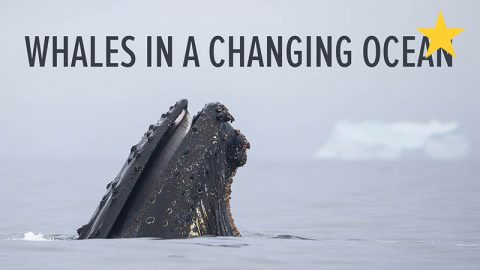 whales-changing-ocean